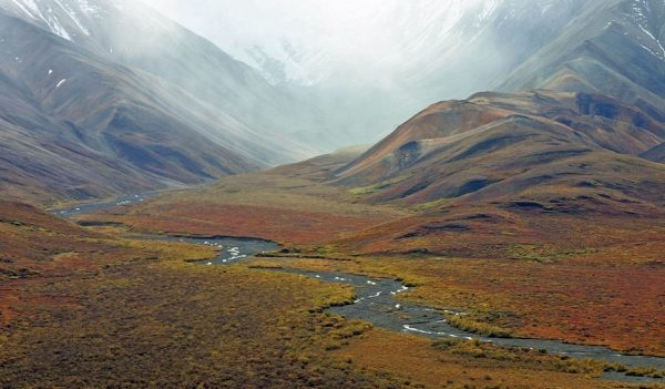 Flora Tundra