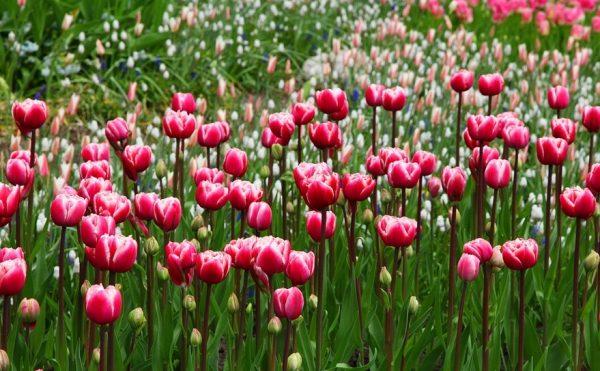 Persebaran Flora di Dunia